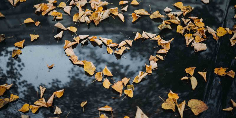 leaves arranged into a heart