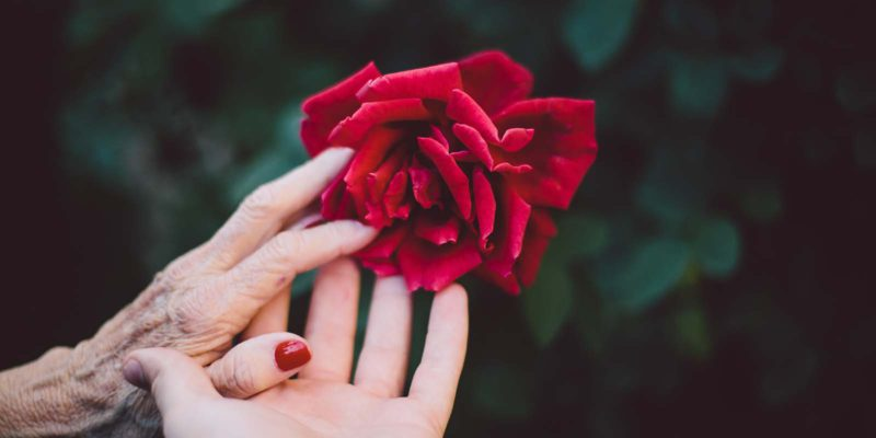 two hands reaching for a red rose
