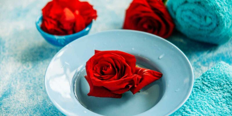 red rose on blue plate